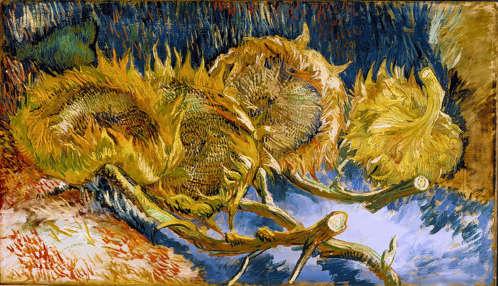 Van Gogh Quattro girasoli recisi