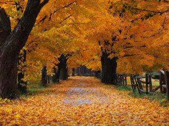 parco autunno