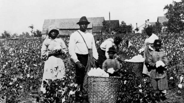 Whitehead foto schiavi