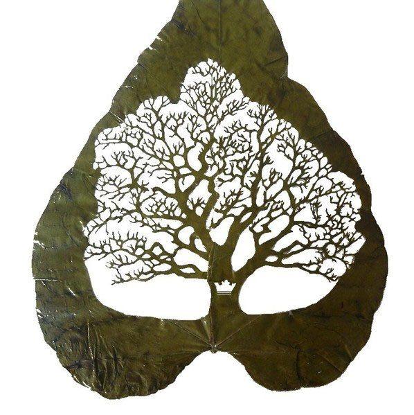 lorenzo-manuel-duran foglia albero