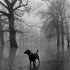 Bayou by Maudie from Pinterest