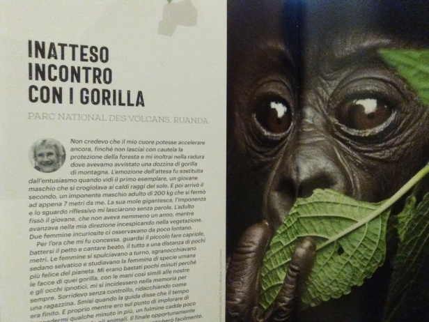 lonely planet gorilla