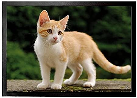 gattino bianco e rosso_