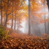 Leggere l'autunno