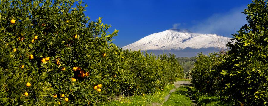 agrumeto-falde-Etna