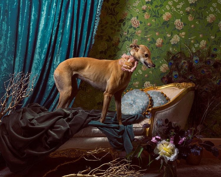 Andres Greyhound_Reclining+Beauty
