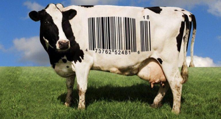 Mucca con codice a barre